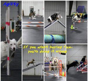 agility collage